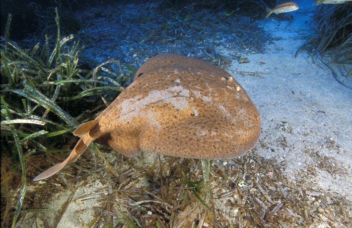 Monitoraggio delle biocenosi di ambiente marino e di transizione